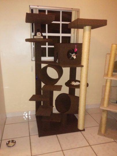 Cat tree done